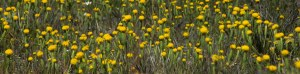 Perth Wildflower Tours