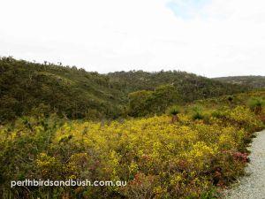 Superb wildflowers in Banyowla Regional Park in October.