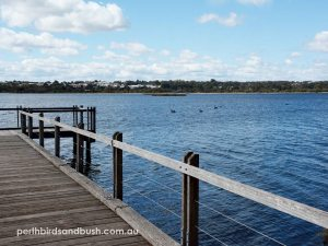Lake Joondalup is one of the biggest lakes in Perth.