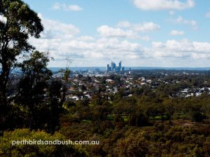 Great views of the city and surrounding areas from Reabold hill.