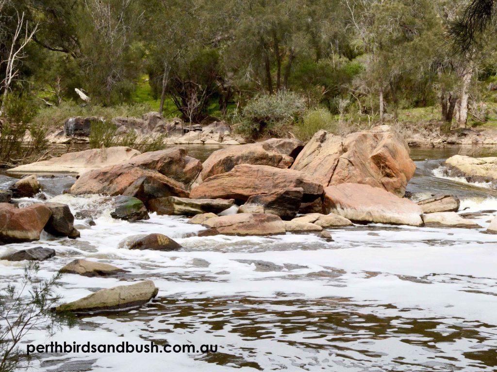 Beautiful Rocky Rapids in the Swan River at Walyunga National Park