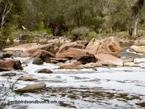 Beautiful Rocky Rapids in the Swan River at Walyunga National Park